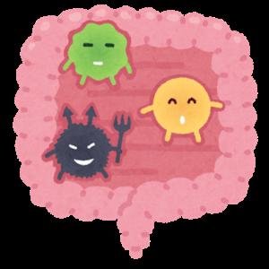 善玉菌と悪玉菌と言いますが、その割合は食べ物の好みによって影響を受けています